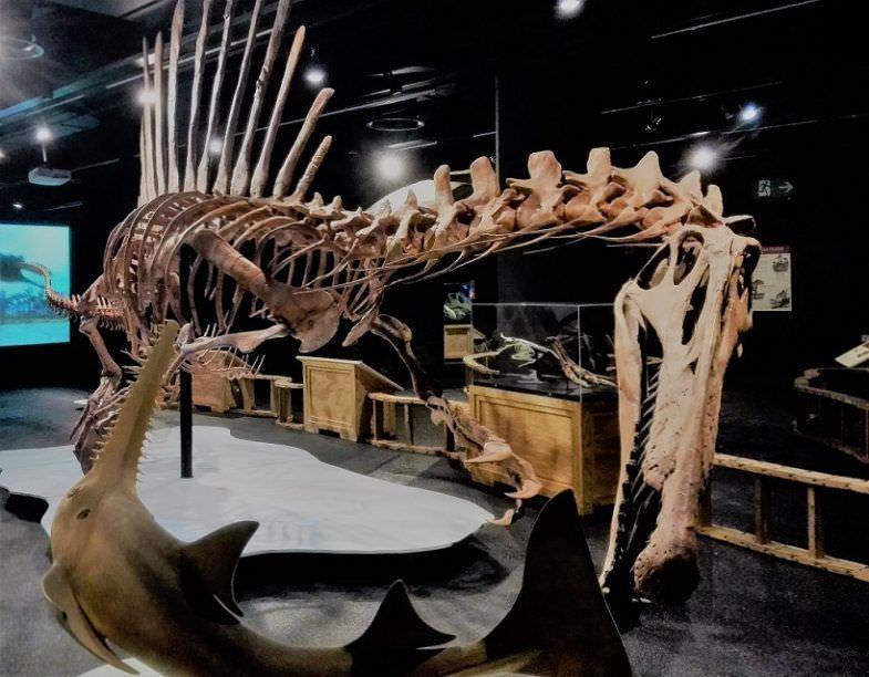 Réplica en tamaño real del esqueleto del Spinosaurus