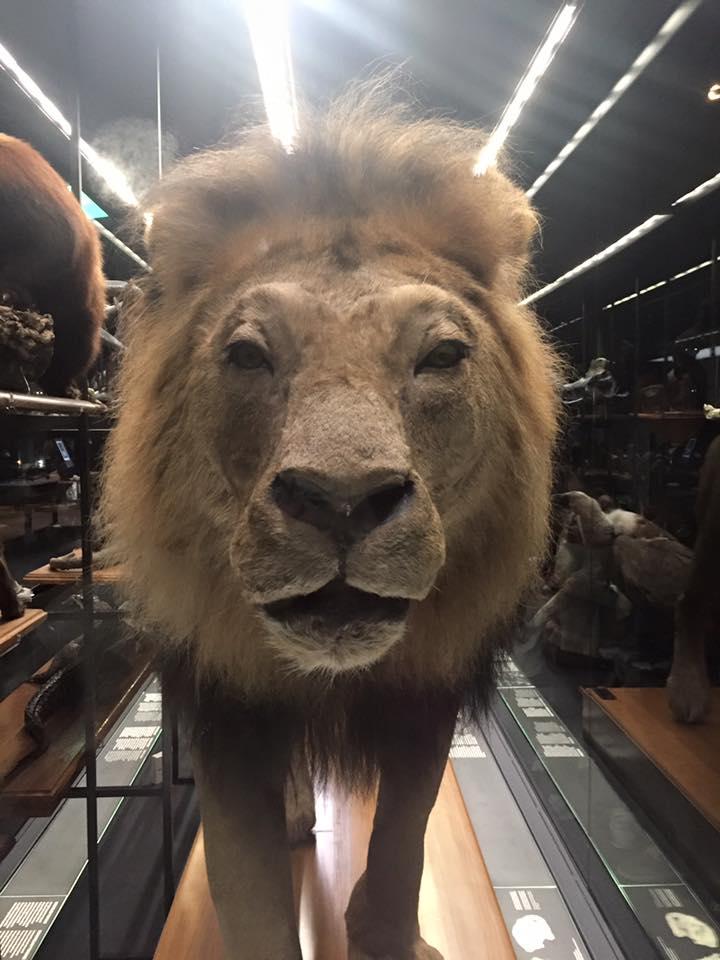 León en exposición Museo Blau