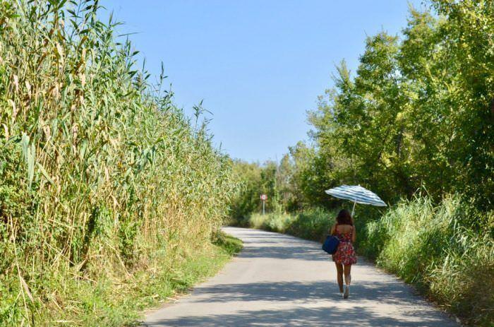 Camino por la reserva natural Remolar-Filipines