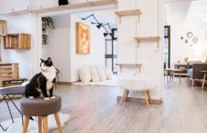 Cat House Barcelona