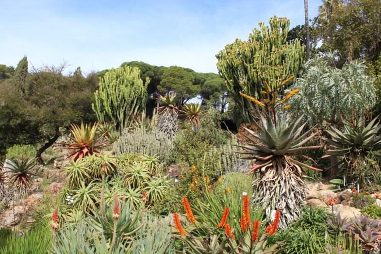 Colecciones Jardín Botánico de Blanes